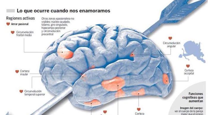 Neurotransmisores implicados en el amor